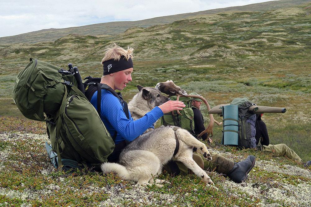 598 dyr av kvoten på 750 ble felt i høst. Nå foreligger oppsynsrapporten etter årets jakt. Foto 2016: Arne Nyaas
