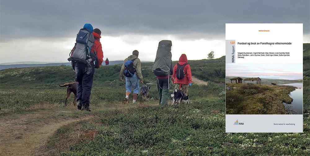 """NINA Rapport 1331: """"Ferdsel og bruk av Forollhogna villreinområde"""" er nå klar for nedlasting. Foto: A. Nyaas og NINA"""