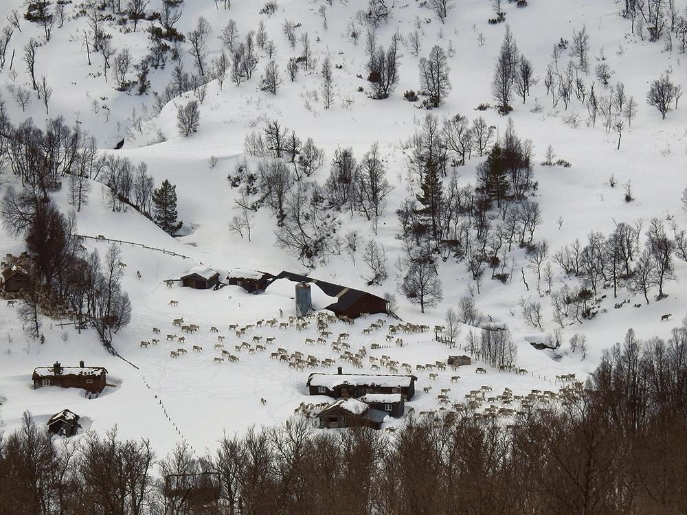 Sørstuøya i Synnerdalen. Foto: Berit Broen, SNO.