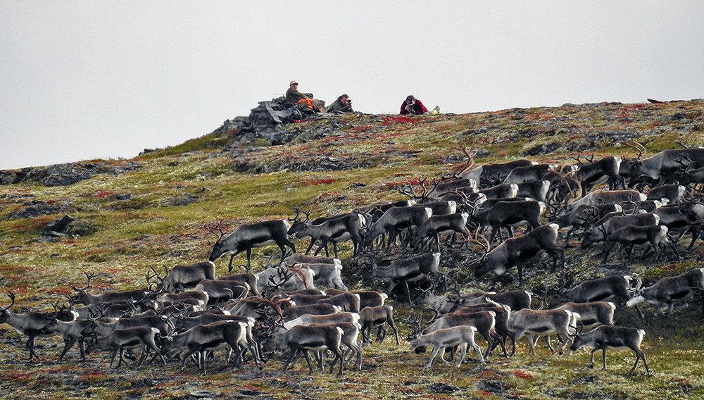 Situasjon fra dagens jakt på kviknegrunn. Foto: Ingebrigt Storli