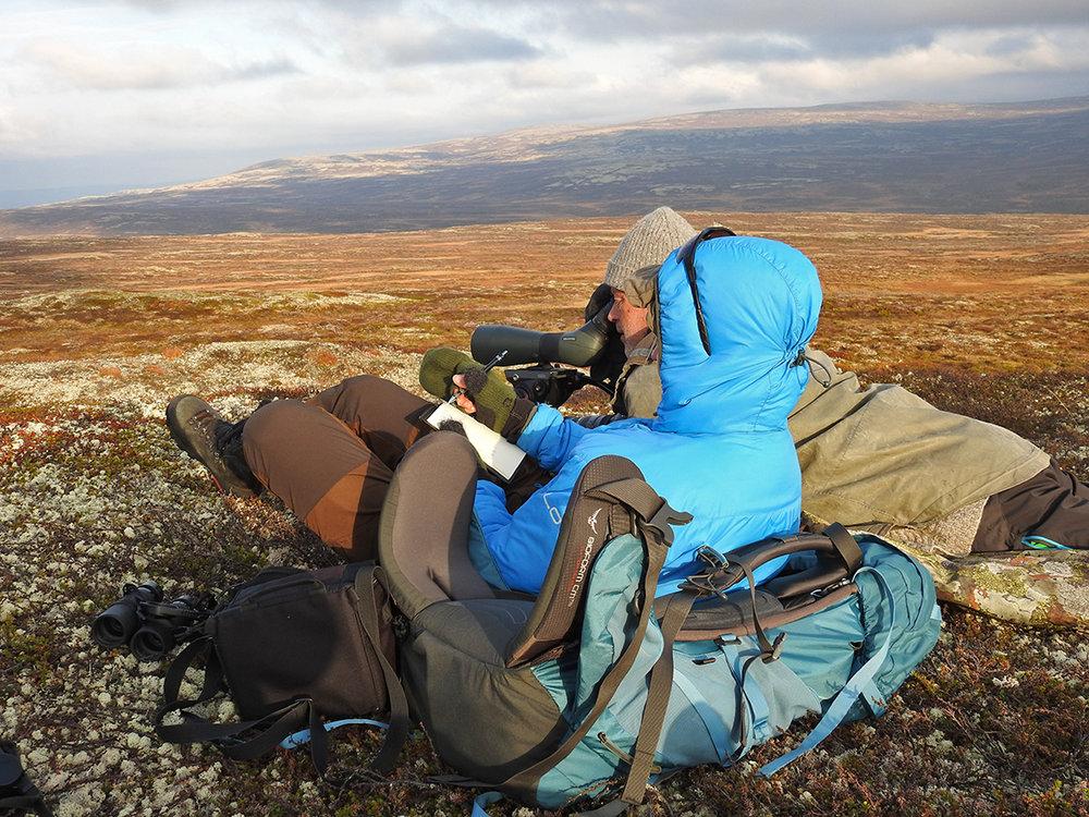 Olav Strand (NINA) bruker teleskopet mens Kristin Lund Austvik (Kvikne Utmarksråd) noterer. Bildet er tatt inne på Tangen i Vingelen. I horisont: Langsfjellet. Foto: Ingebrigt Storli