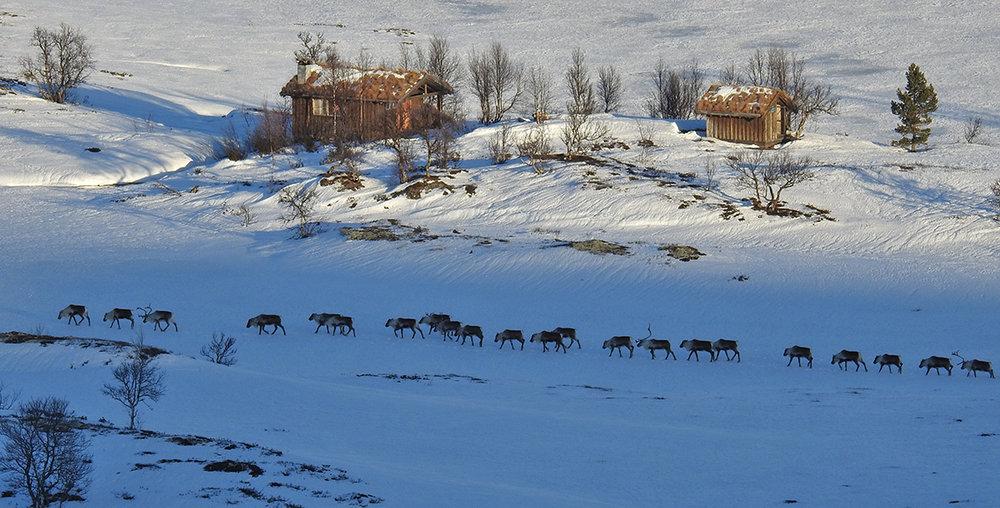 Førjulsstemning på Eidsfjellet. Foto: Ingebrigt Storli