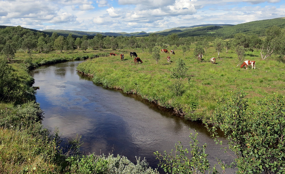 568 norske naturområder har kommet inn på den europeiske vernelista Emerald Network, blant disse Forollhogna med seterdalene. Foto: Arne Nyaas