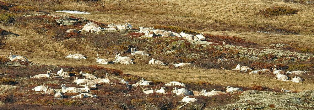 Øst for Grønntjønnan 9. mai. Foto: Ingebrigt Storli
