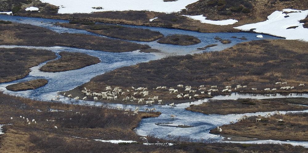 Sør for Nordylægeret 15. mai. Foto: Ingebrigt Storli