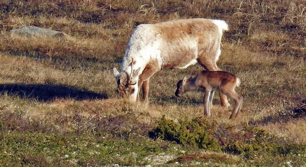 Vest for Litj-Hiåsjøen 25. mai. Foto: Ingebrigt Storli