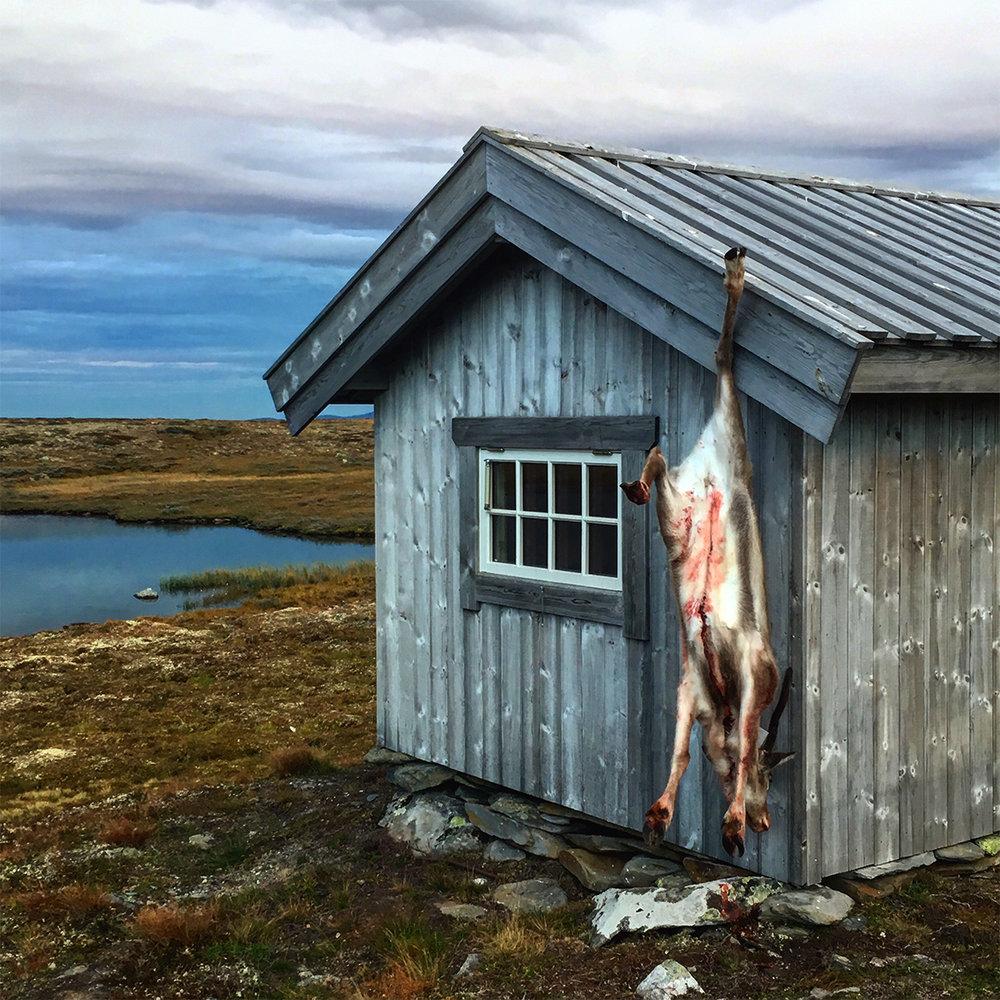 """""""Simlekalv på 24 kilo, opphengt for natta ved Midthøbua i Vingelen. Kalven gikk for seg sjøl"""". Foto 1. september 2018, Erik Lillebakken."""