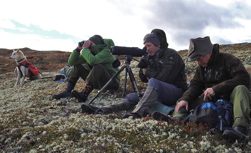 Årets strukturtelling er gjennomført i Forollhogna. I løpet av to dager ble 1260 dyr fotografert/filmet sør for Ya, i området Magnhildsjøan/Sætertangen. Det endelige telleresultatet blir presentert senere, så følg med på denne nettsida. Foto: Ingebrigt Storli