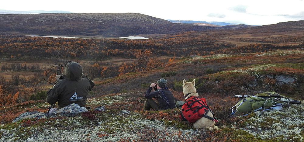 God oversikt over dyrene som befinner seg på myrdraget øst for Magnhildsjøan. Se bildet under. Foto: Ingebrigt Storli
