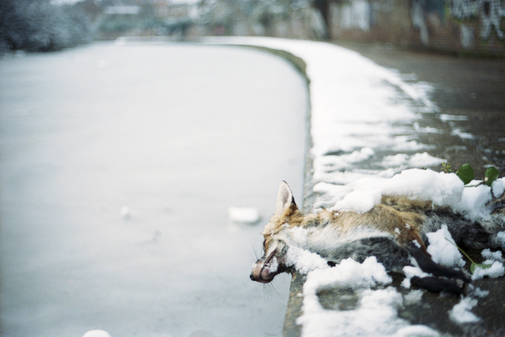 _Dead Fox