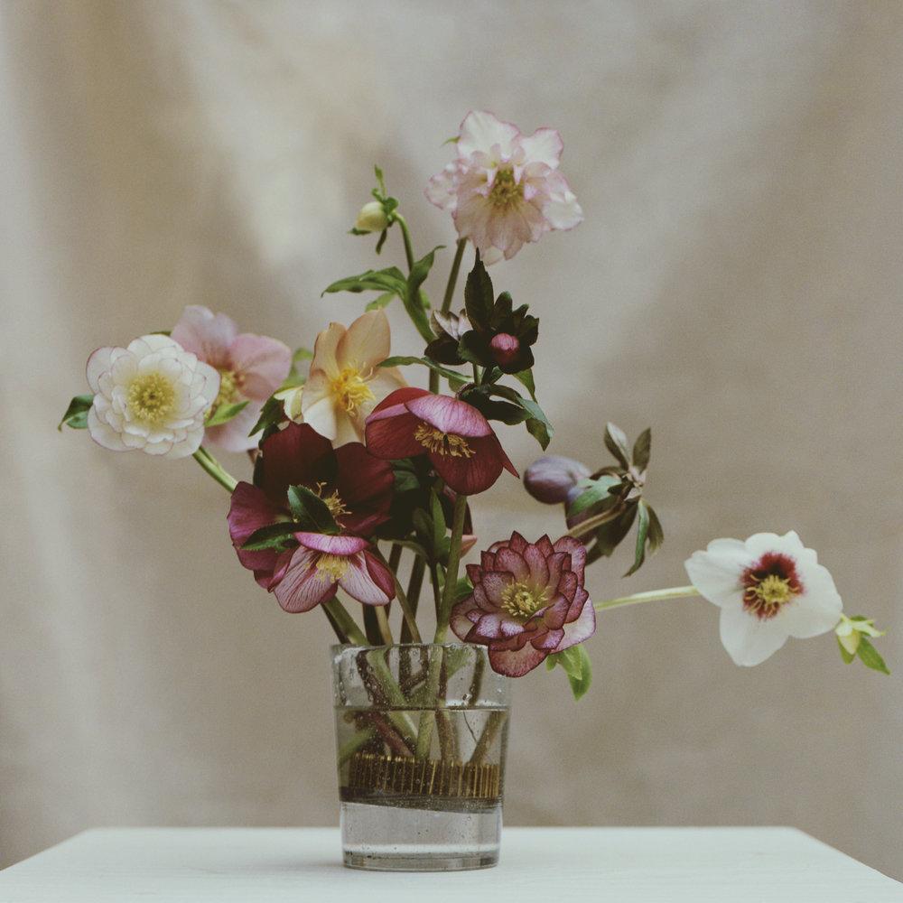 Hellebores For Le Monde 'Garden Party' - Arranged By Fjura