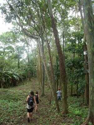 Snårig regnskog
