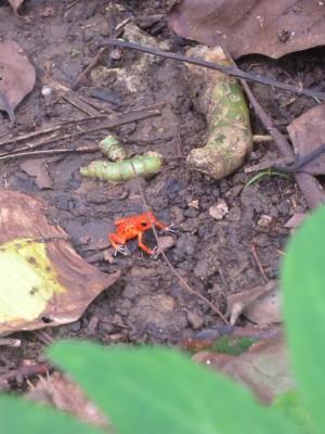 Red Frog, som inte längre vill bo på red frog beach pga hotellbyggen