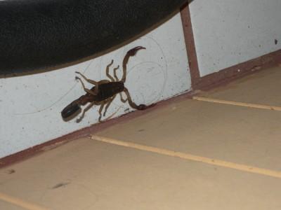 skorpionen.jpeg