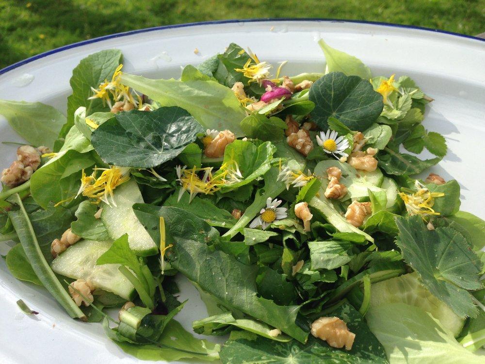 Sommarsallad på grön blad mmmmm Maskros, kirskål, daggkåpa, krasse...