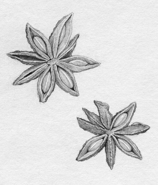 anise(grey).jpg