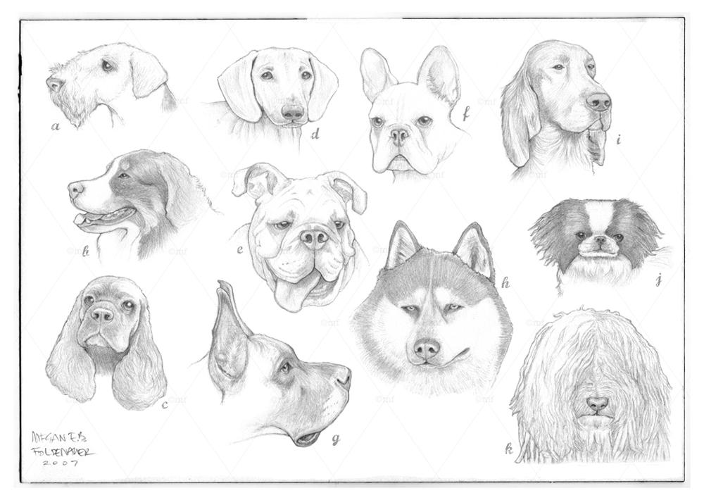 a-z_dogs.jpg