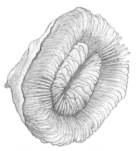 plate_coral.jpg