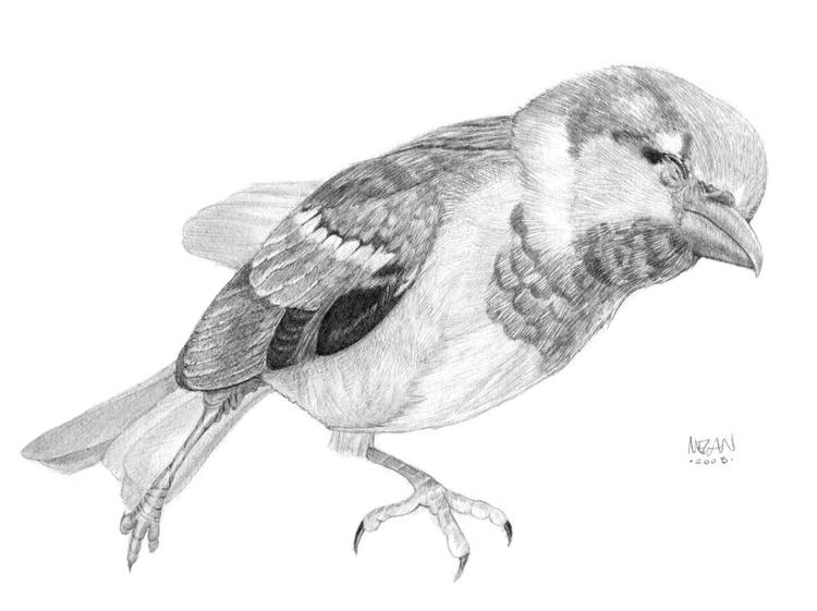 dead_bird.jpg