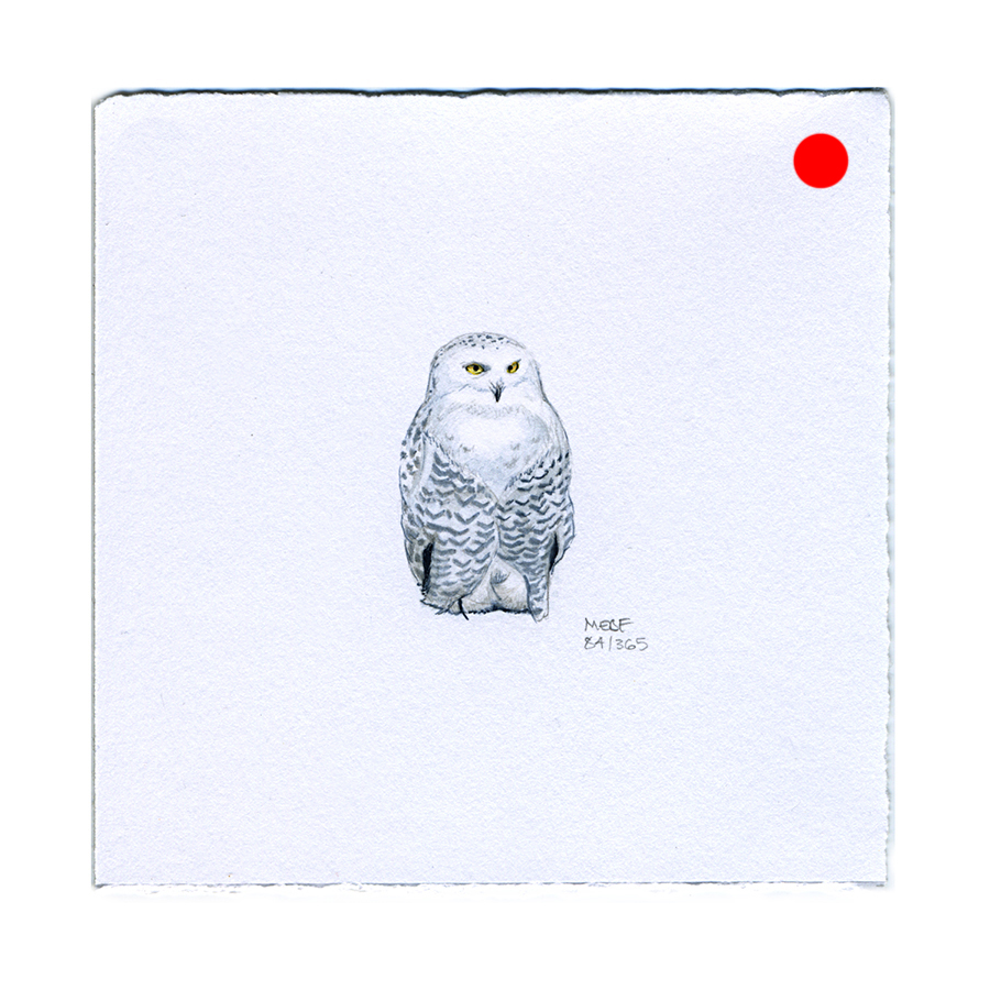 draw84_snowyowl(SOLD).jpg
