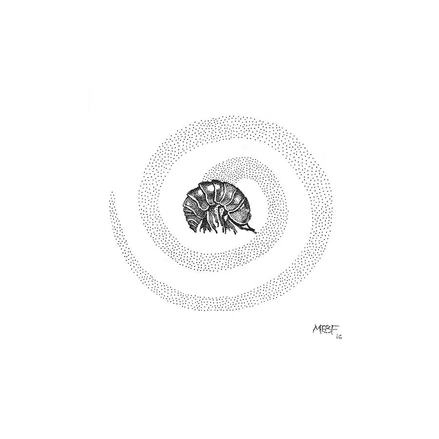 dot_isopod001.jpg