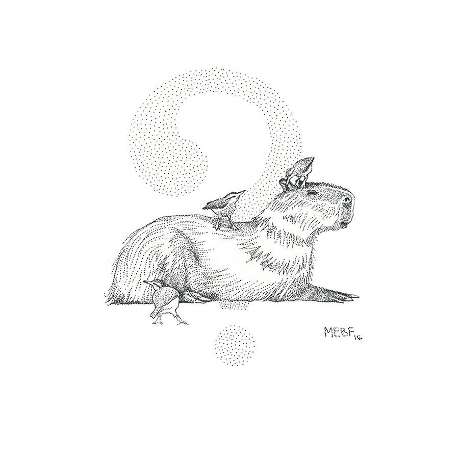 dot_capybara001.jpg