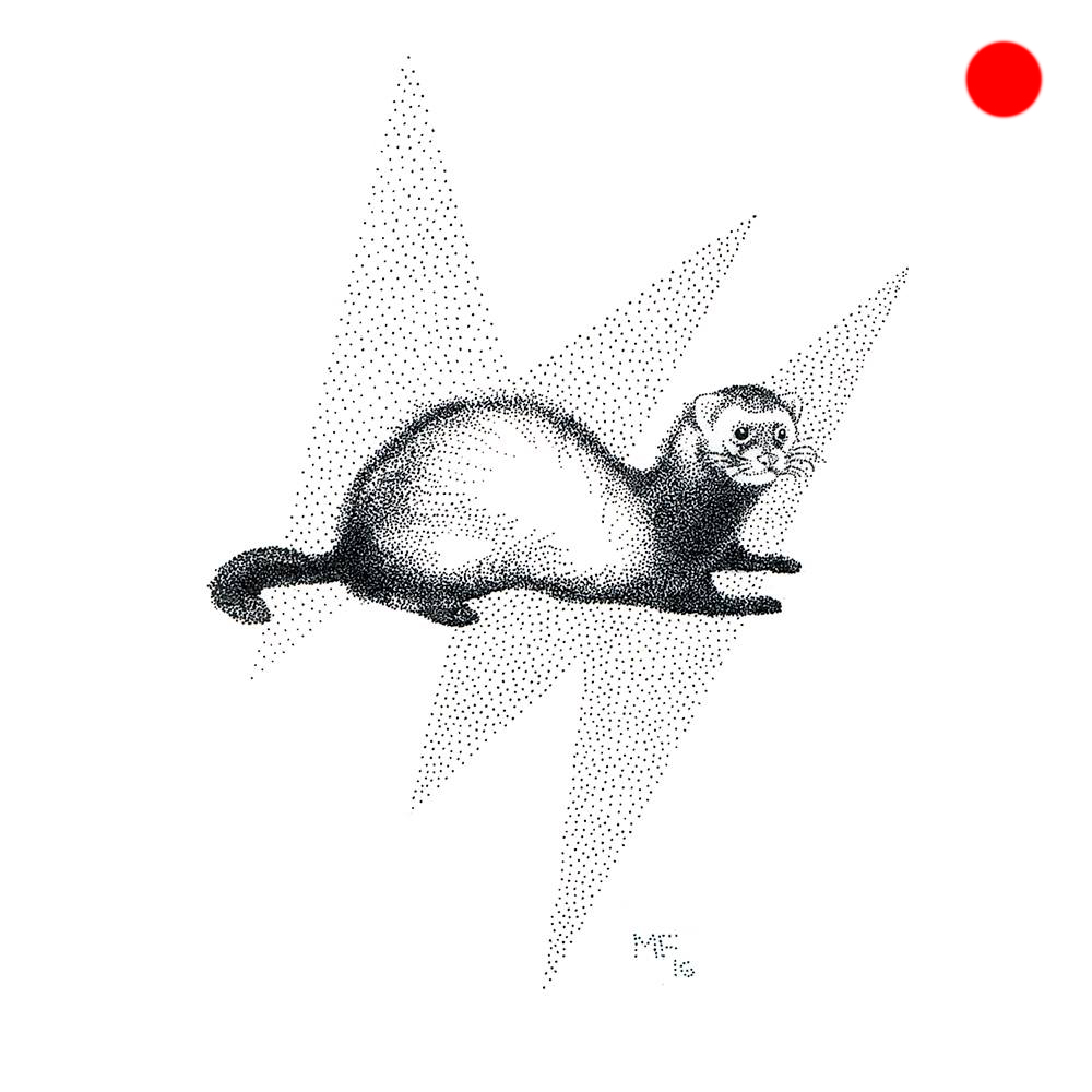 dot_ferret(SOLD).jpg