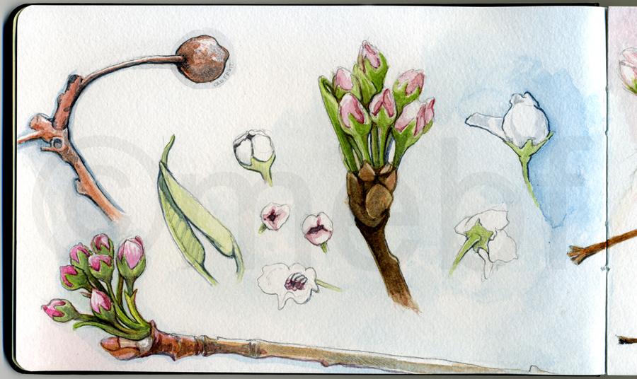 pear_tree2.jpg