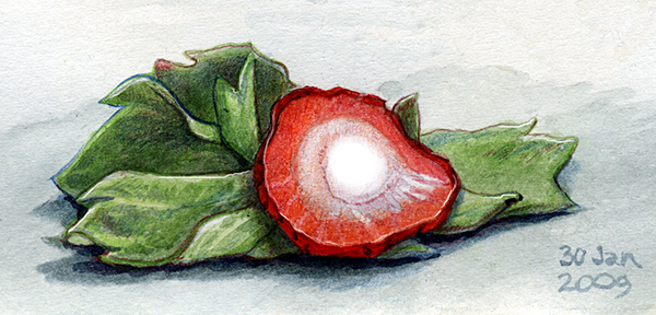 strawberry_top.jpg