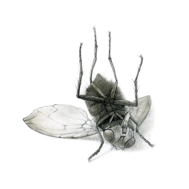triptych_dead_fly.jpg