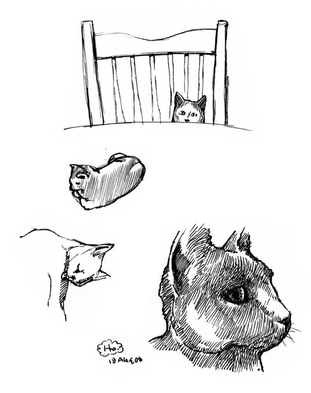 jeff_heath_cat(ink).jpg