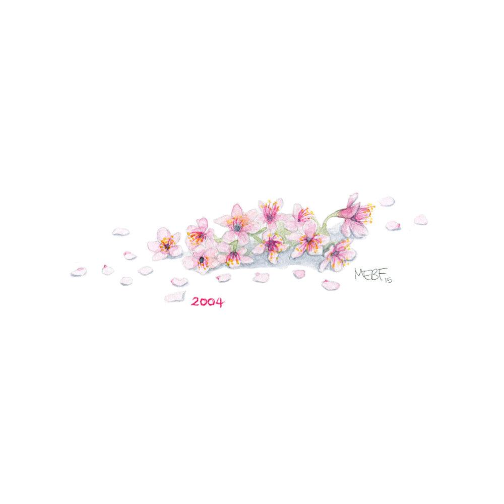 cherryblossoms04.jpg