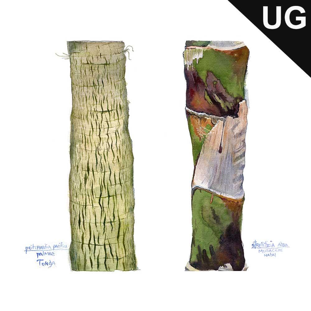 tree_trunks.jpg
