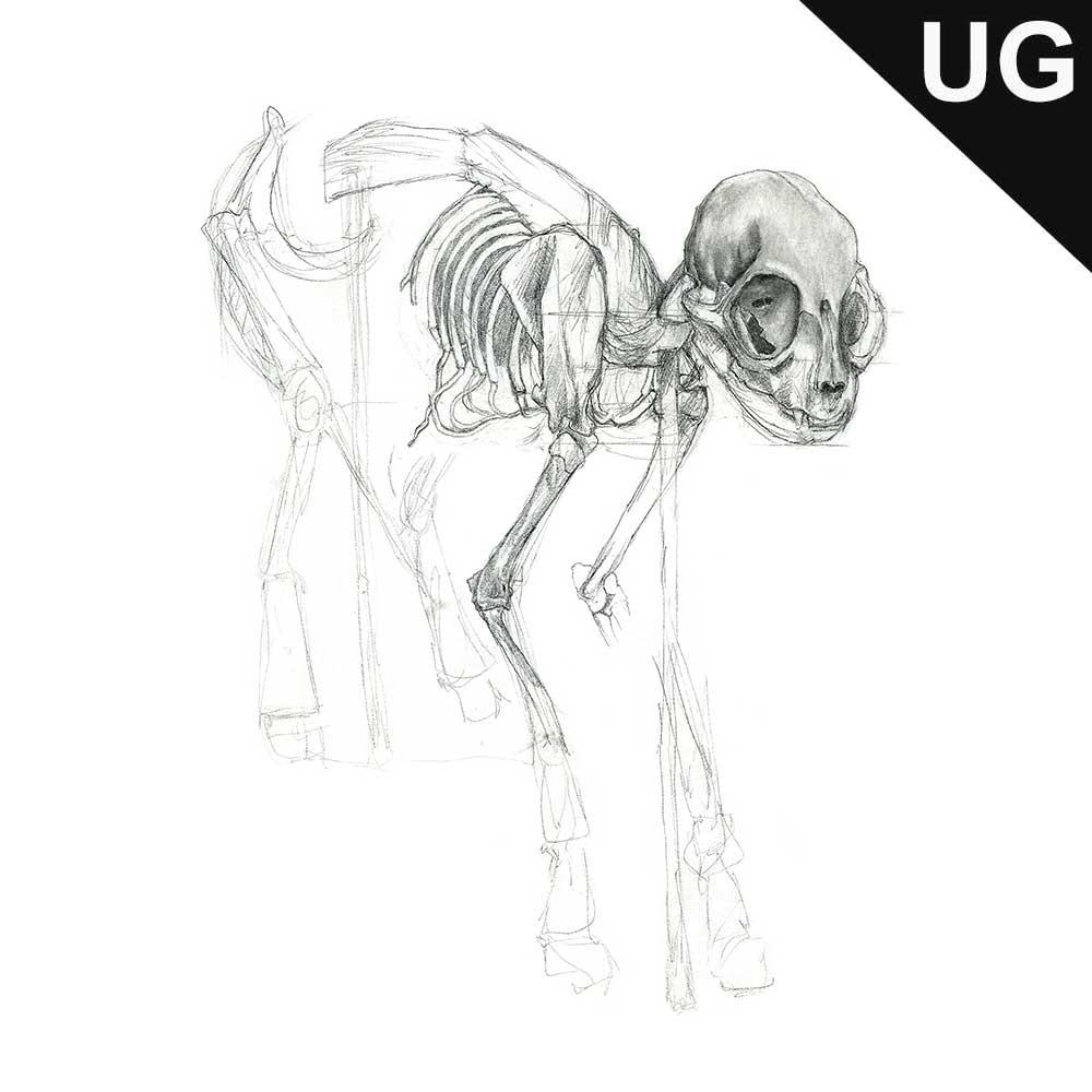 unfinished_skeleton001.jpg