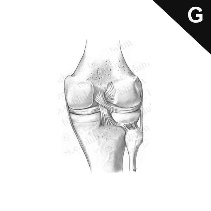 post_knee_002.jpg