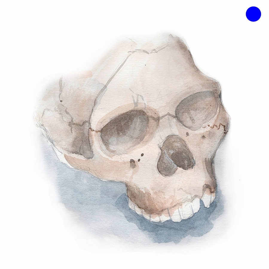 demo_skull(sm).jpg