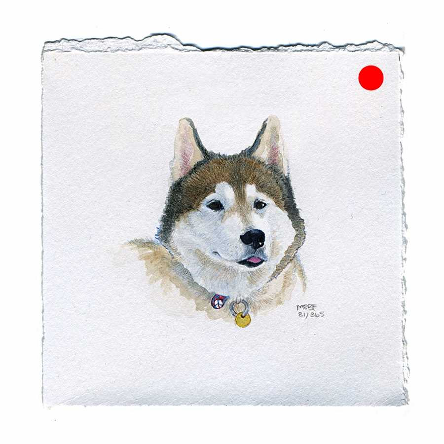 draw81_husky.jpg