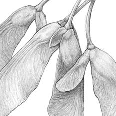 Pods/Seeds
