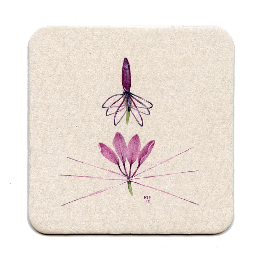 365_45(spider_flower)001.jpg