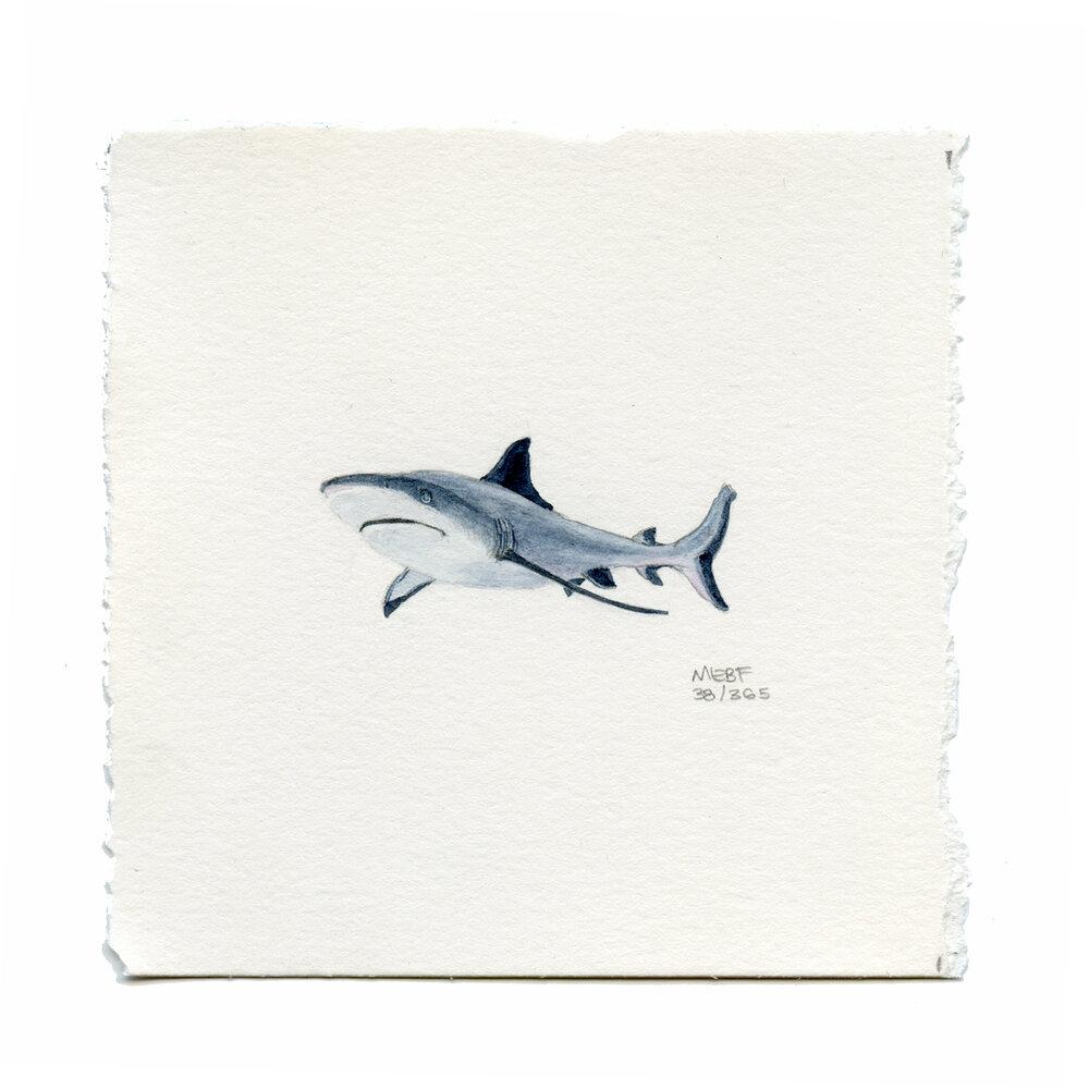 draw38_shark.jpg