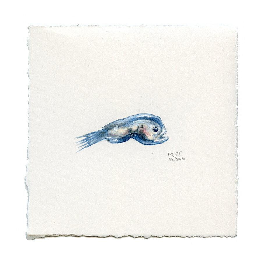 draw68_anglerfish.jpg