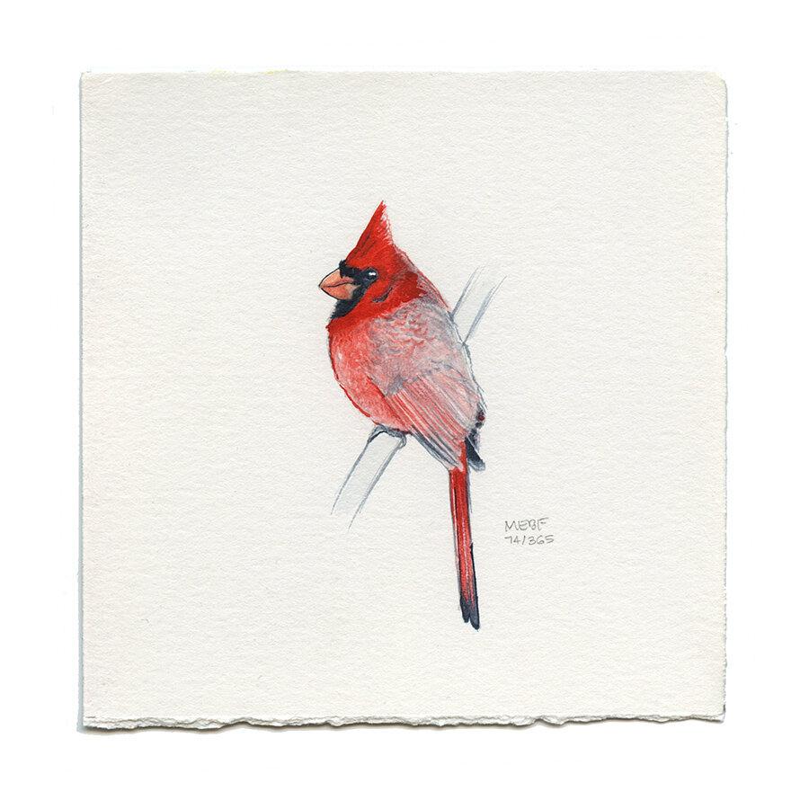 draw74_cardinal.jpg