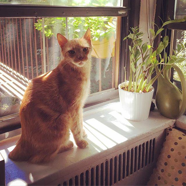 Jasper is enjoying a sunny autumn day.