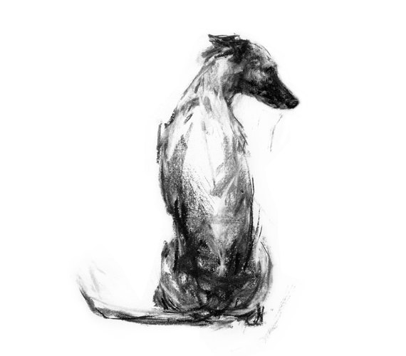'Whippet Sitting' paintmydog on Etsy