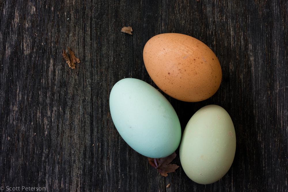 eggs-1497.jpg