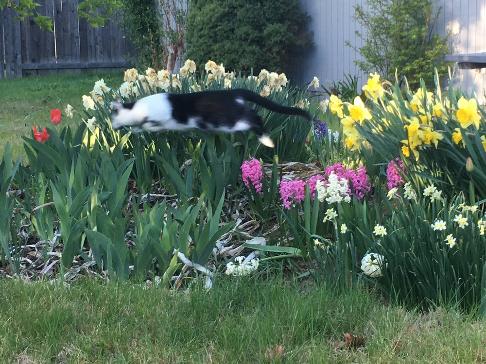 Lewis gets high on gardening.JPG