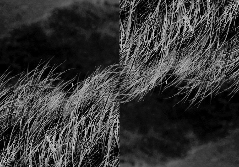 grass print.jpg