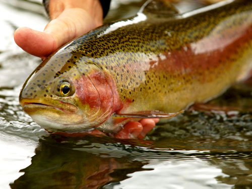 Fishing | Fly Fishing | River Fishing| Things to do in Steamboat Springs, Colorado