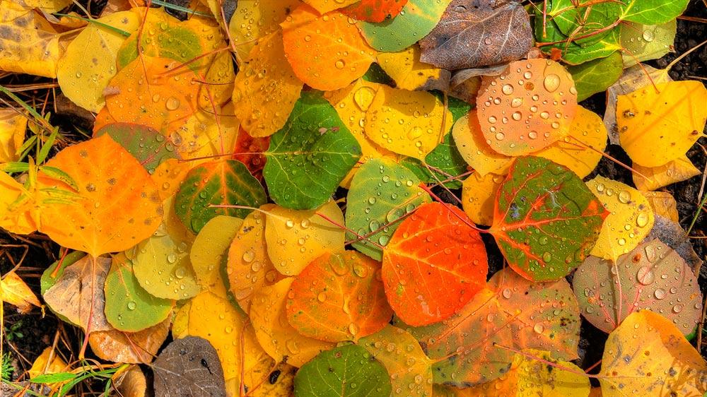Fall Foliage Package