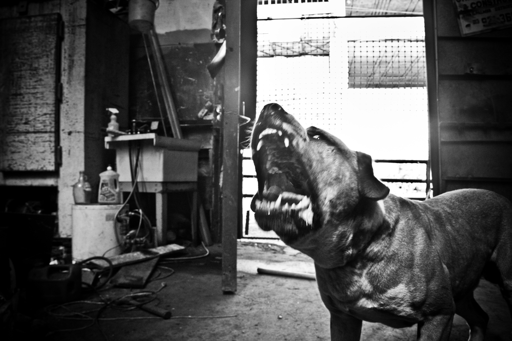 A guard dog protects the entrance of a metal scrappers warehouse. Detroit.